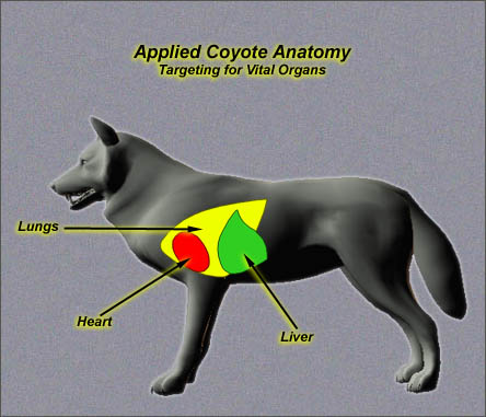 Coyote Anatomy I Portrait